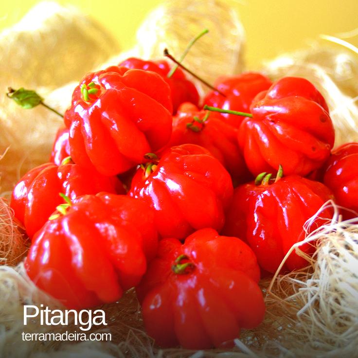 Pitangas rich in flavour and calcium. #terramadeira   #pitanga   #fruit   #exoticfruit