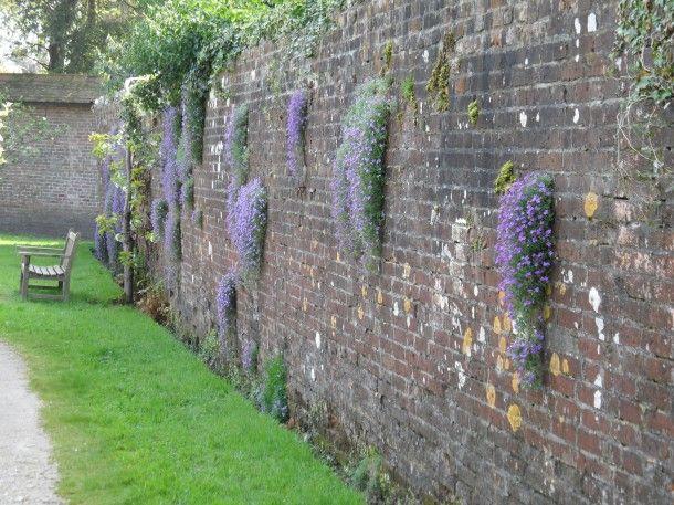 1000 images about exterieur tuin op pinterest tuinen veranda 39 s en tuin - Hek begroeide ...