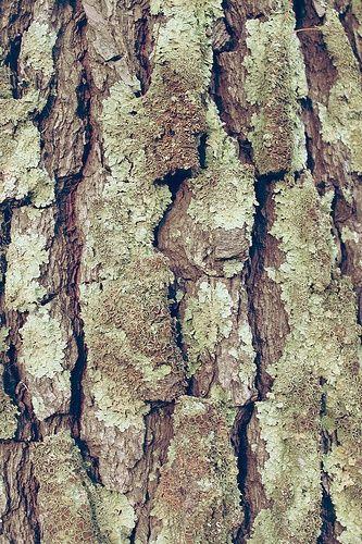 how to keep bark on wood