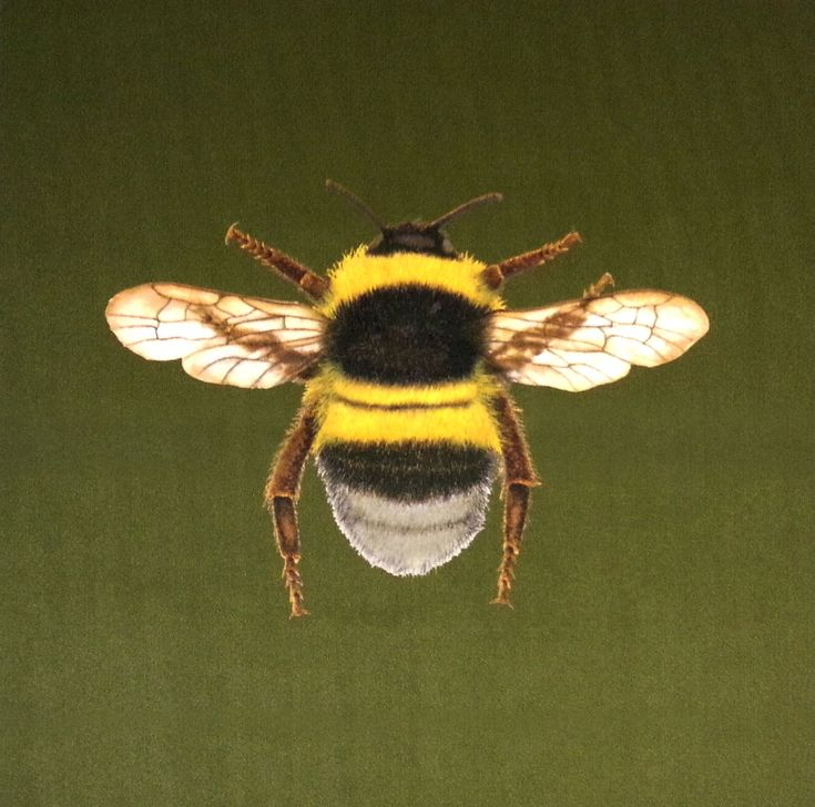 Velvet Bumblebee Cushion Panel Olive £6
