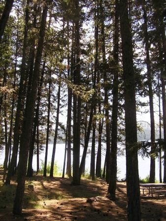 Placid Lake State Park Campground, Seeley Lake, MT photo 2