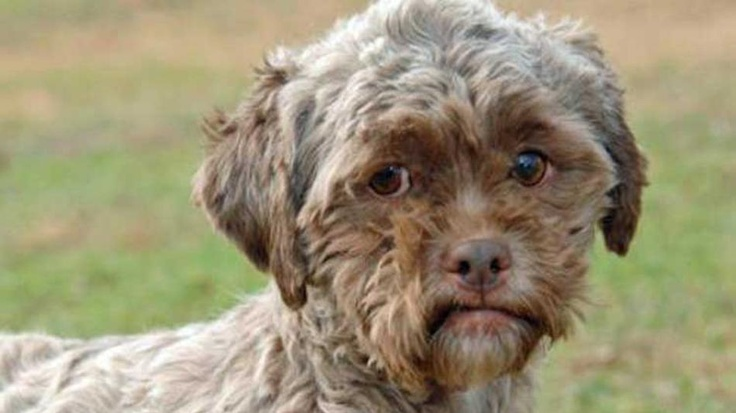Dog With Human Face Needs New Home