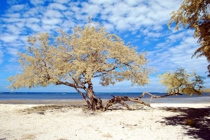 a beautiful day in Bama Beach, inside The Baluran National Park, Banyuwangi, East Java, Indonesia