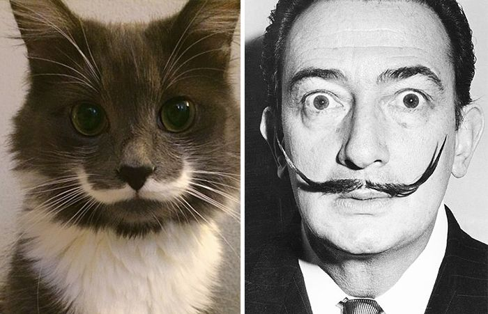 20 + cats that look like other things - Hamilton The Hipster Cat Looks Like Salvador Dali