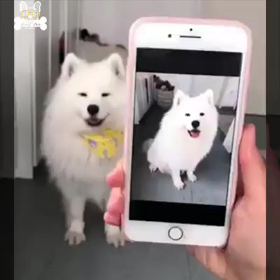 Talented Pup