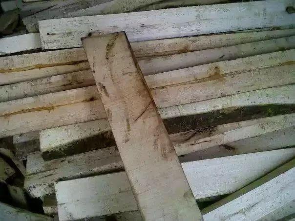 Bisnis kayu balken sengon laut   mocokeneKayu balken sengon laut sangat diburu oleh pabrikan barecore atau playwood. Harga balken sengon laut saat ini Mencapai Rp.900.000/m3.