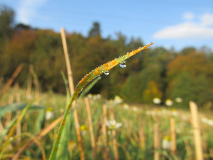Dewy grass by Tomáš Junga on 500px