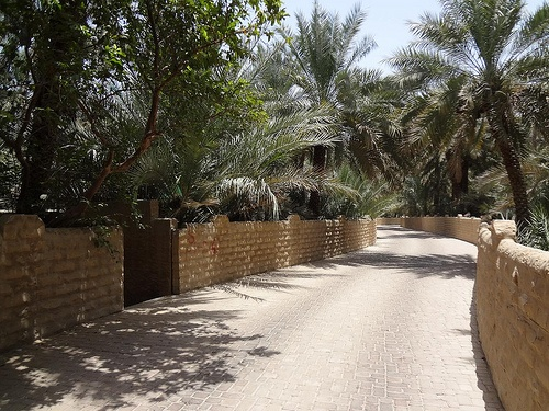 Al Ain Oasis in Al Ain, Abu Dhabi, United Arab Emirates