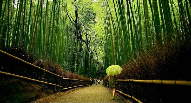 1-Бамбуковый лес Сагано в Японии.jpg (800×434)