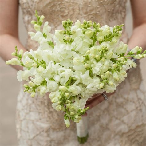 #Wedding Flowers - Snapdragons? - lovely