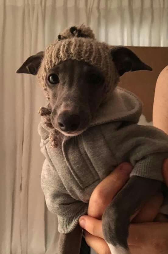 Getting ready for cooler weather in style Pet Accessories, Dog Toys, Cat Toys, Pet Tricks