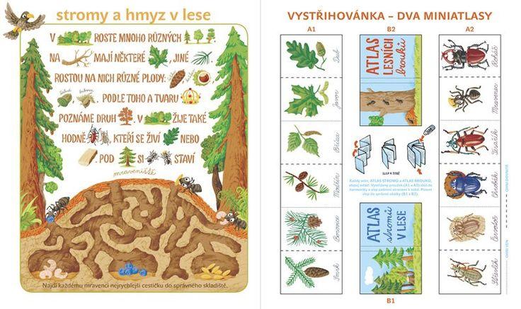 stromy a hmyz v lese