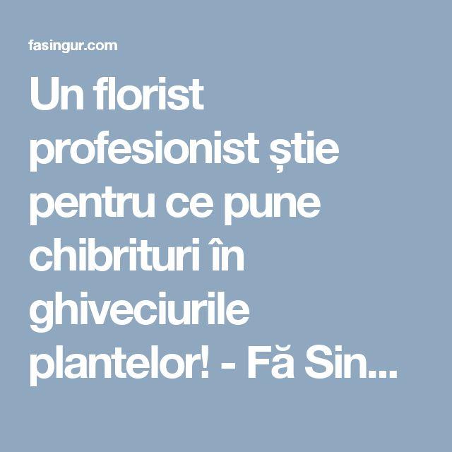 Un florist profesionist știe pentru ce pune chibrituri în ghiveciurile plantelor! - Fă Singur
