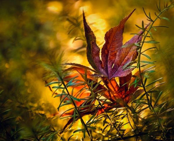 Best Nature Pictures of the Week October 4th to October 10th, 2014