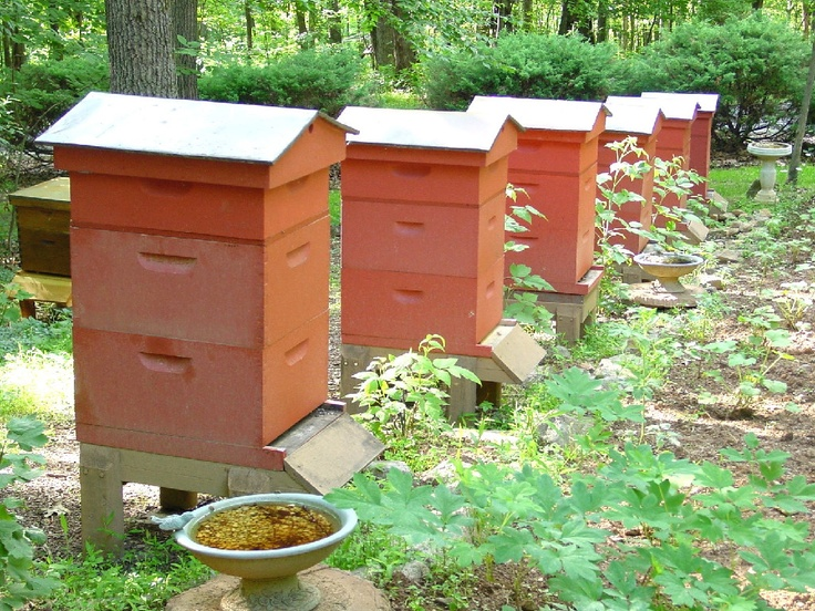 Northern Bred Winter Hardy Hygienic Queens & Bees For Sale