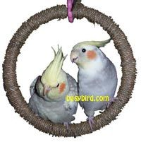 Super fun, shreddable swings will provide tons of chewing and nibbling for maxium beak exercise!