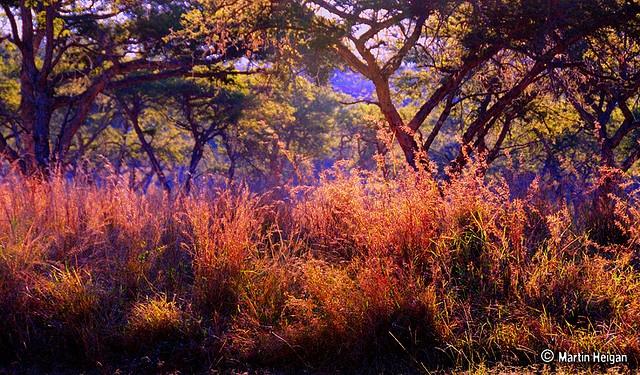 The Colours of the Bushveld, Nelspruit, Mpumalanga