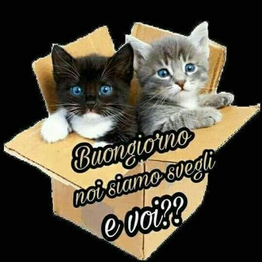 906 best buongiorno images on pinterest vignettes for Buongiorno con gattini