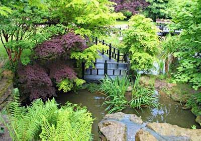 This fern garden features an assortment of fern species, as well as a selection of wonderfully colored trees. The watery landscape is not only beautiful, it suits the ferns just fine, as they can tolerate more marshy moisture than many other plants.