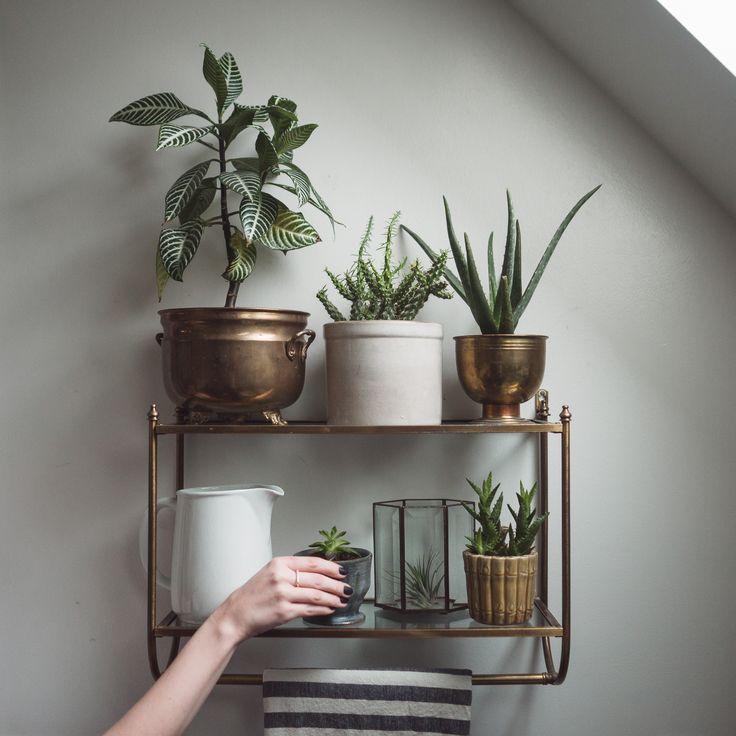 brass & glass shelf // plants