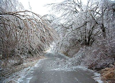 Ice Storm: 2007 Ice, Ky Ice, Storms 2009, Csu Photo, Tulsa Icestorm Thi, Ice Storms, Trees Bend, Icestorm 2007, Cards Games