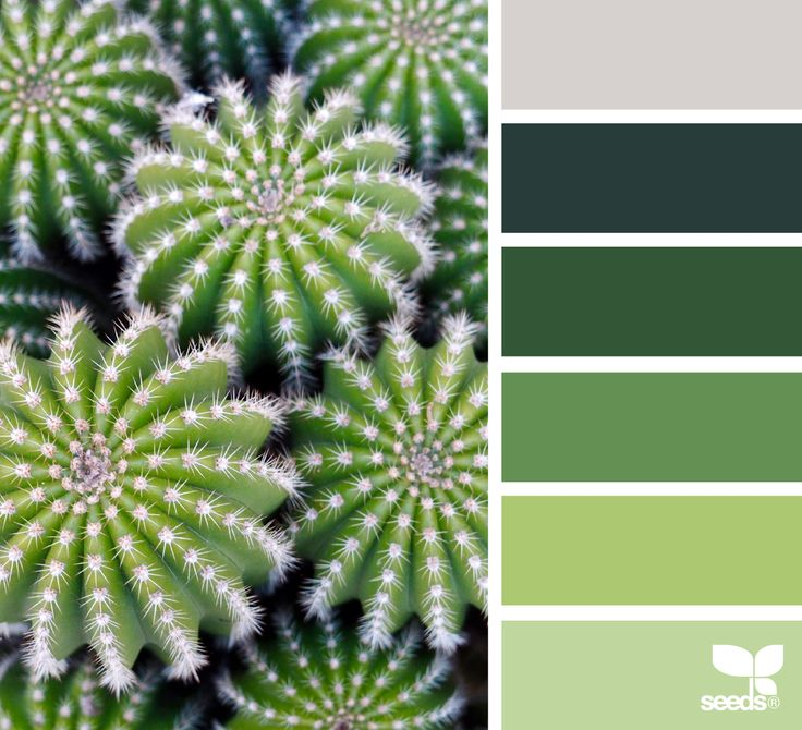 Cacti Color - https://www.design-seeds.com/in-nature/succulents/cacti-color-5
