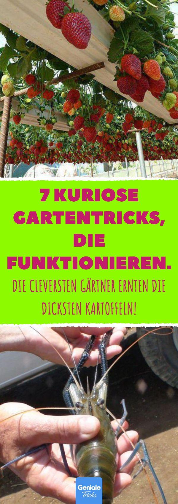 7 kuriose Gartentricks, die funktionieren. 7 ungewöhnliche Anbaumethoden und Garten …   – Garten, Balkon, Terrasse & Fensterbank