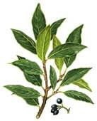 Bay Leaves  Bay leaves are widely used throughout the world. It may be best known in bouquets garnis or used similarly in soups, sauces, stews, daubes and courts-bouillon's, an appropriate seasoning for fish, meat and poultry. Bay leaf is often included as a pickling spice.