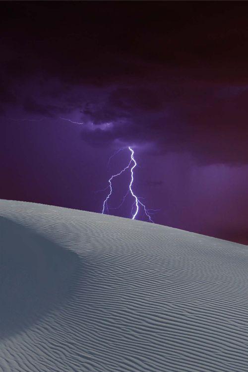 Nature's Whip! - by Donald Palansky