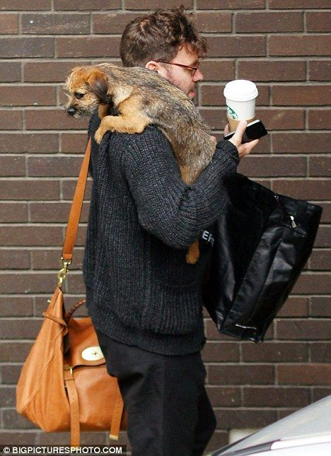 Don't let me go, Daddy: Will Young's border terrier puppy Esme clings on to his shoulder as they make their way inside a TV studio