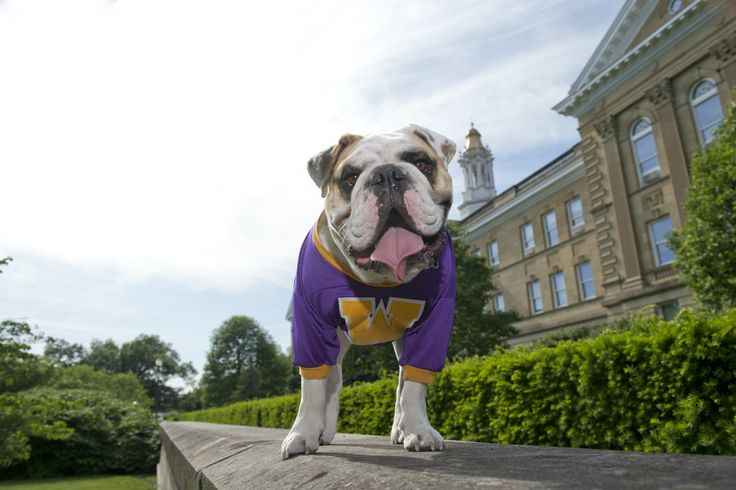 Meet Colonel Rock III! He's the mascot for Western Illinois University and, we're proud to say, covered by ASPCA Pet Health Insurance.