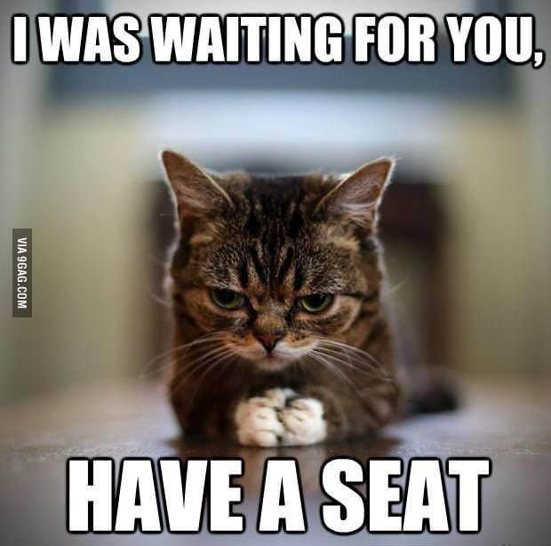 Funny Memes For Kids No Swearing : Have a seat human we need to talk teaching memes