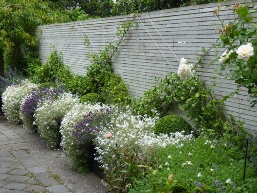 "A stark border made apparently wider by an additional row of Buxus and billowing borders of Lavenders and Snow-In-Summer. The champagne coloured rose is Rosa ""Avalanche"""