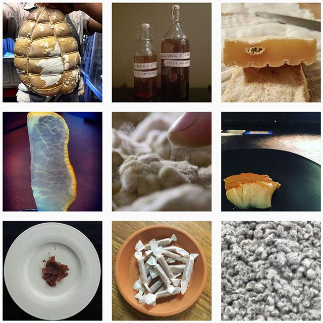 2006年、日本醸造学会大会で国を代表する菌「国菌」に認定された麹菌、本名アスペルギルス・オリゼ。世界で様々な人が親しむ「発酵」から、「麹への注目」という新たな流れが生まれたようです。SNSをはじめとするグローバル情報をお届けします。