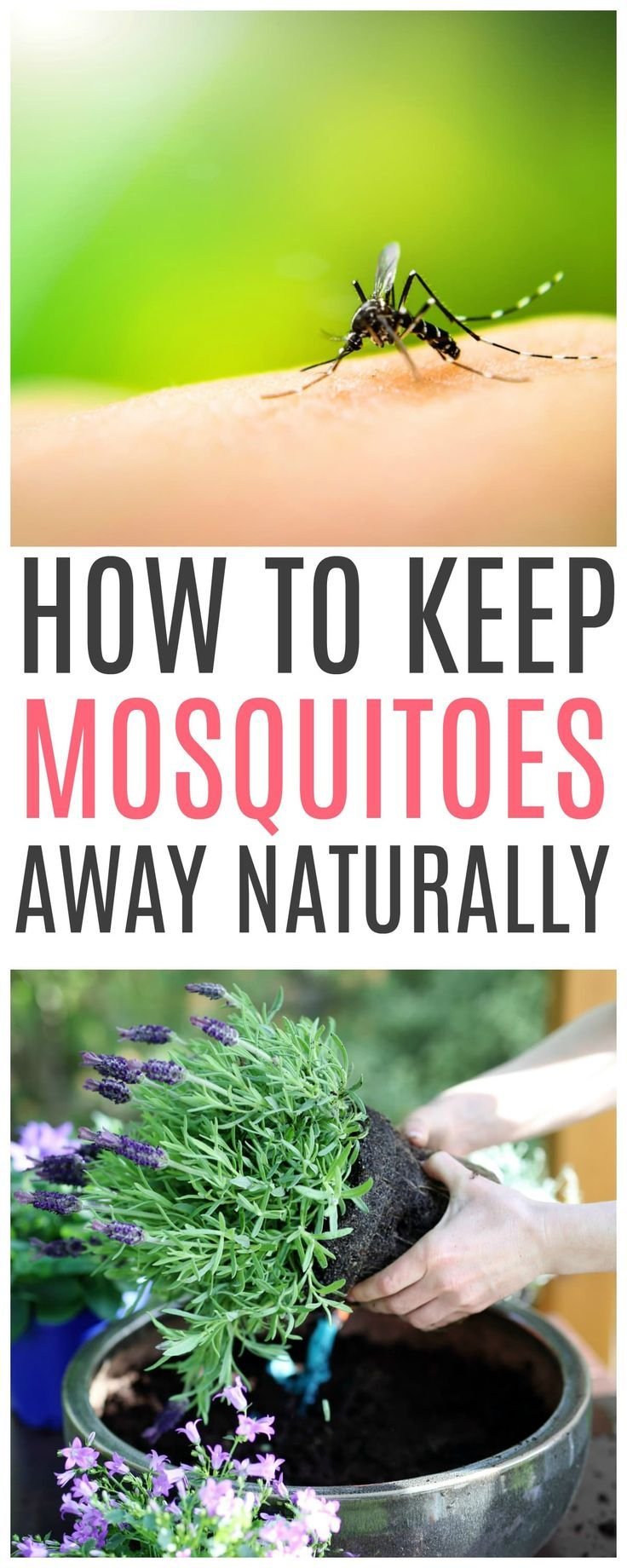 How To Get Rid Of Mosquitoes Life Hacks Mosquito Trap Helpful Hints