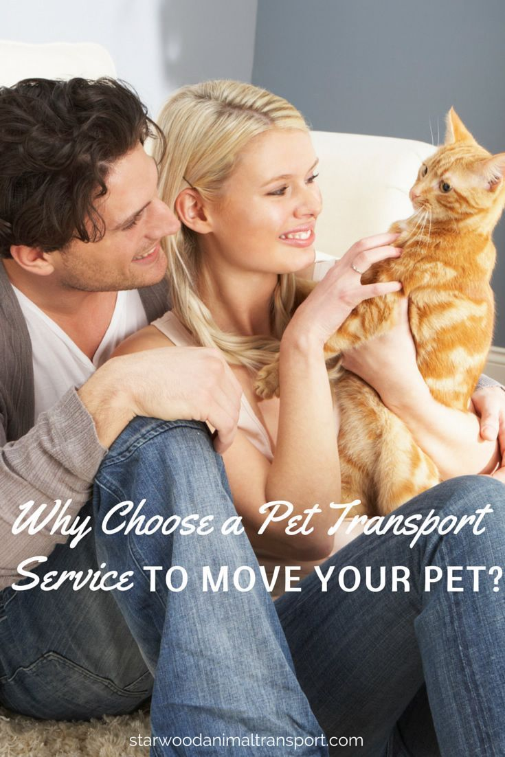 Why choose a pet transport service to move your pet? http://www.starwoodanimaltransport.com/why-choose-a-pet-transport-service-to-move-your-pet/