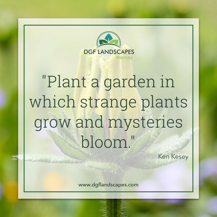 """""""Plant a garden in which strange plants grow and mysteries bloom."""" - Ken Kesey 🌳🌹🍄 #TuesdayTruth"""