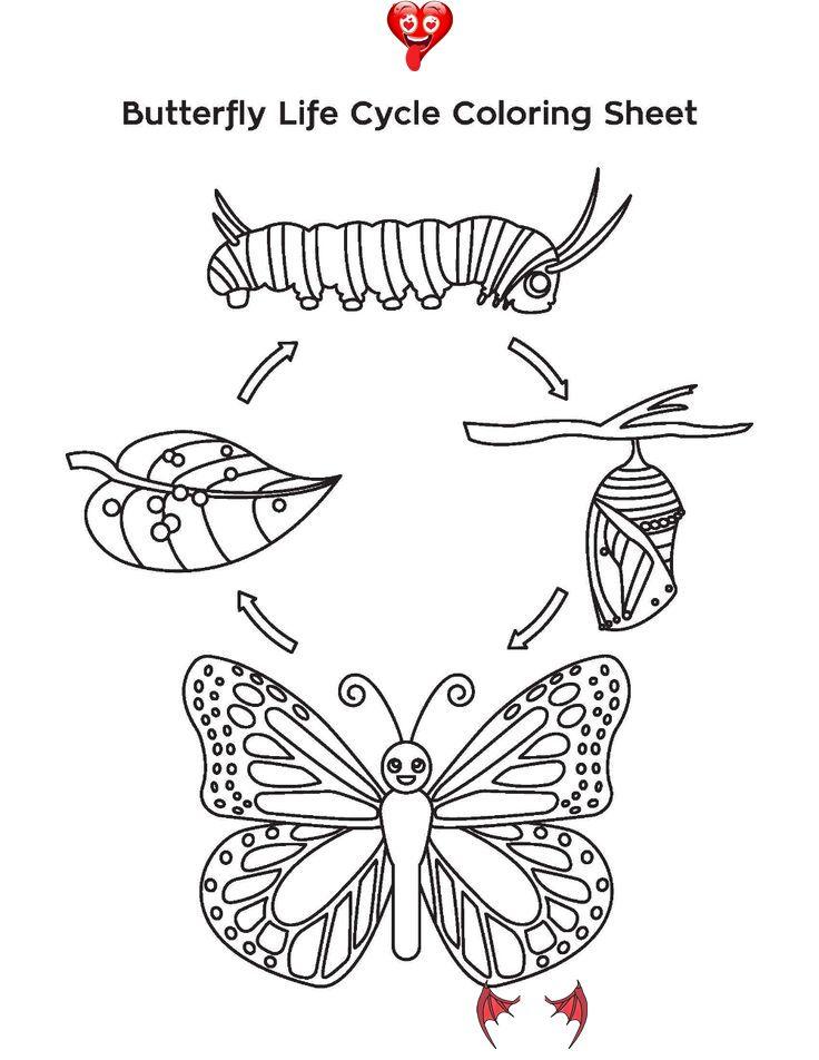 Pin By Adelaidafernandinaalinapi On Butterfly Life Cycle In 2020 Butterfly Life Cycle Butterfly Life Cycle Kindergarten Life Cycles