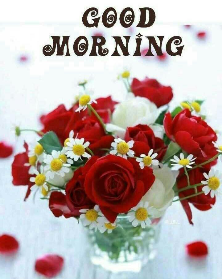 Good Morning Images For Whatsapp Free Download Hd Wallpaper Pictures Photos Of Good Good Morning Beautiful Flowers Good Morning Flowers Good Morning Images Good morning hd wallpapers free download