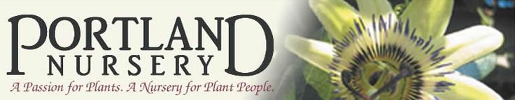 Portland Nursery - link to video, how to plant a cherry tree. I must have a cherry tree or four.