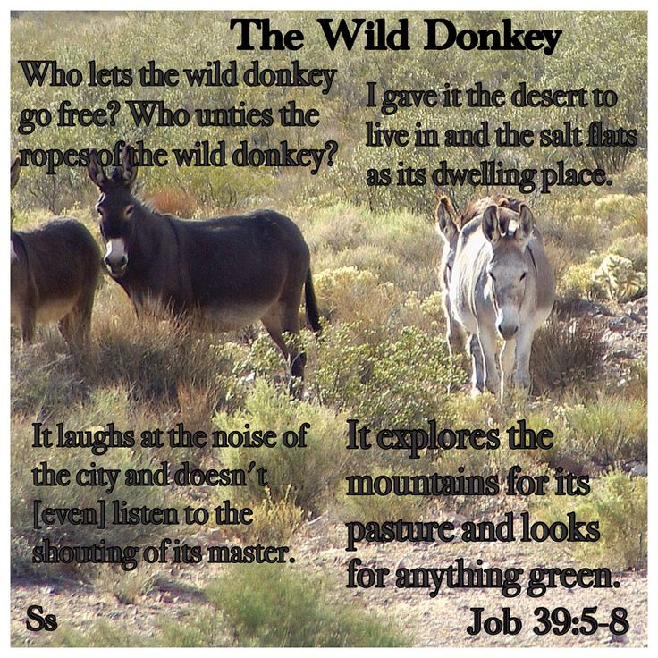 Bible Wild Dog By The Ears