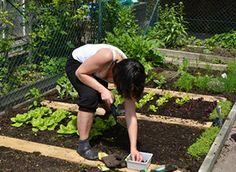 Knoblauch anpflanzen