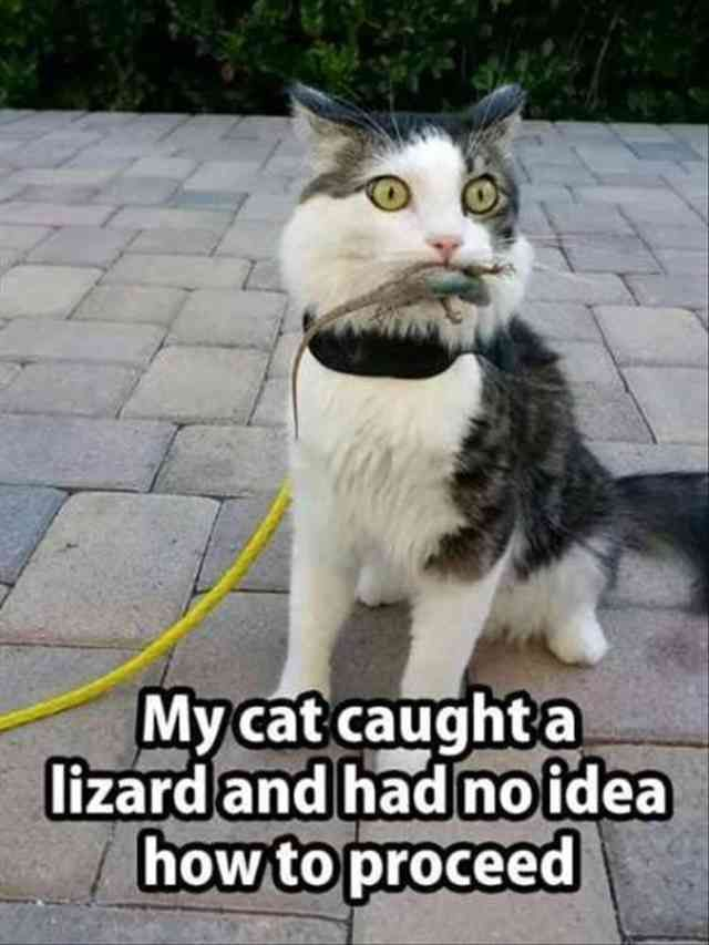 22 Funny Animal Pictures Of The Day - Can't stop laughing. Feel kinda sorry for the lizard.