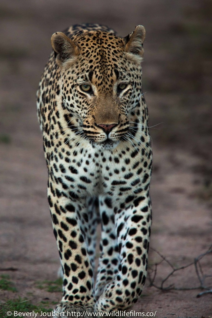 PurrTy. Majestic animals, Animals beautiful