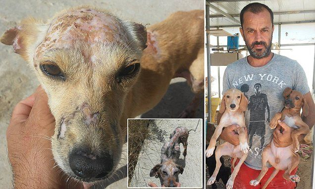 WARNING: GRAPHIC CONTENT - As the financial crisis' grip on Greece gets ever tighter, people are being forced to dump their unnecessary expenditures – their dogs.