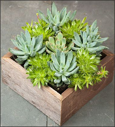 Indoor Gardening Gifts 40 best indoor gardening images on pinterest indoor gardening silver and gold succulent garden planter free shipping 3795 garden planterssucculents gardengarden giftsindoor workwithnaturefo