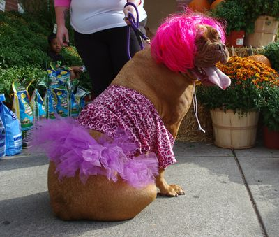 I need some help from my fellow pinners...please vote for my dog dressed as (Nikki Minage) so she can win this costume contest....thanks! Please vote for this entry in Whole Foods Market University Heights Halloween Costume Contest!