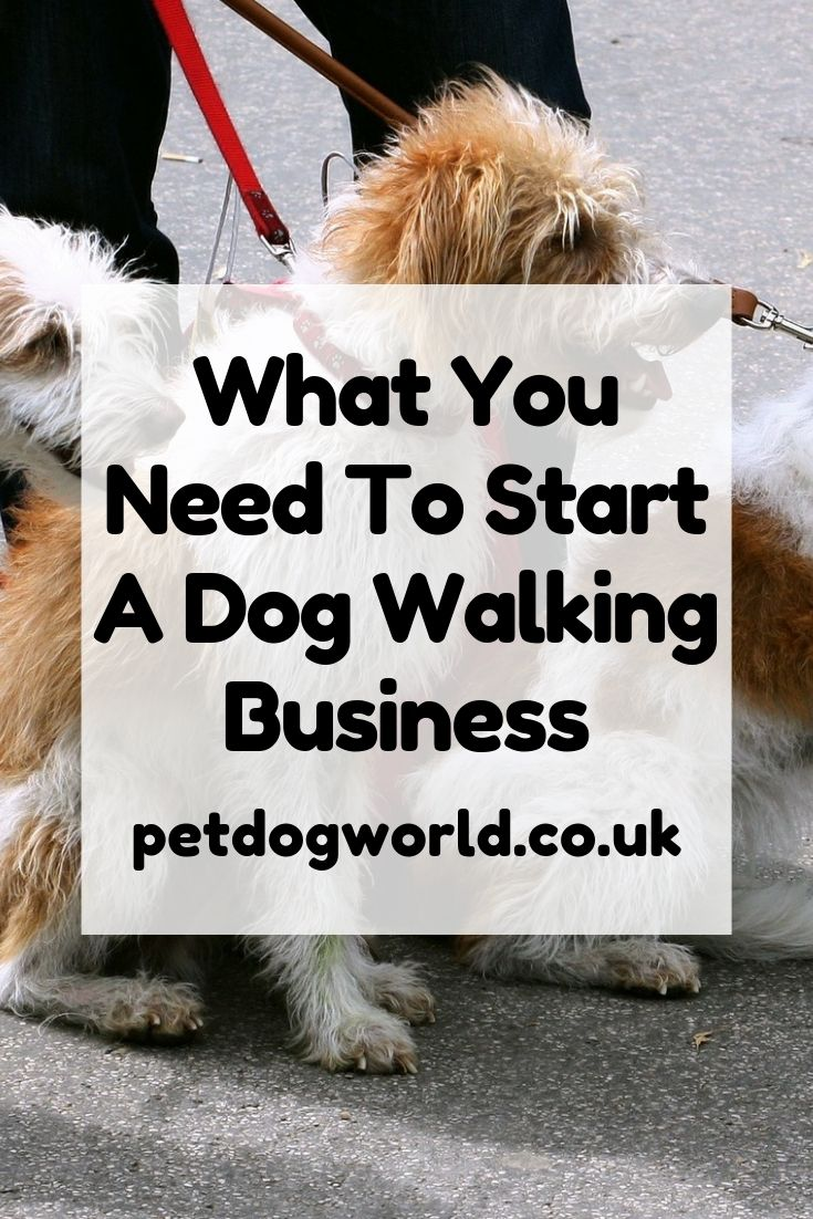 What You Need To Start A Dog Walking Business Dog Walking