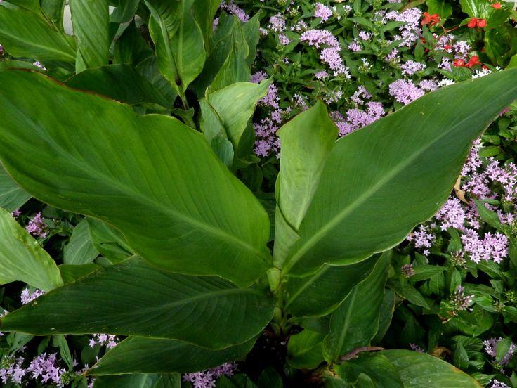 72 best tropical backyard plants images on Pinterest ...