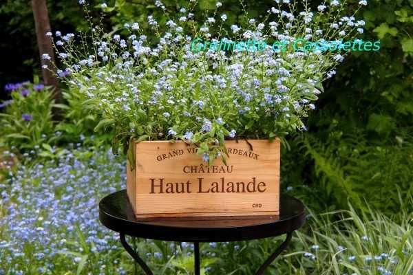 Les 9 meilleures images du tableau Fleurs du Jardin sur Pinterest ...